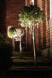晚上结构树 免版税图库摄影