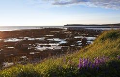 晚上视图,岩石港口,纽芬兰 图库摄影