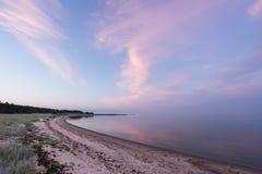 晚上阳光和云杉的树在海岸、桃红色云彩和蓝天背景 海滩海岸线展望期山夏天 海边森林自然 免版税库存照片