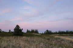 晚上阳光和云杉的树在海岸、桃红色云彩和蓝天背景 海滩海岸线展望期山夏天 库存照片
