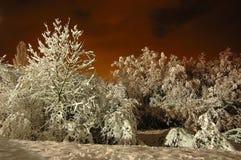 晚上雪 免版税库存照片
