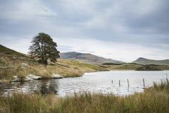 晚上Llyn y Dywarchen湖的风景图象在秋天在锡 库存图片