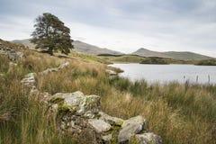 晚上Llyn y Dywarchen湖的风景图象在秋天在锡 免版税库存图片