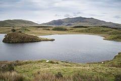 晚上Llyn y Dywarchen湖的风景图象在秋天在锡 免版税图库摄影