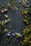 晚夏草甸开花和黑黑板的植物 免版税库存照片