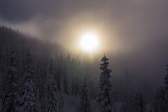晚朦胧的日落通过在斯诺伊树上面的雾在山森林里 库存照片