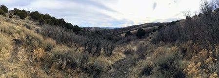 晚秋天全景森林观看远足,骑自行车,通过在黄色叉子的树马背落后,并且罗斯峡谷在Oquirr落后 免版税库存图片