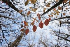 晚秋天在有五颜六色的叶子的公园 免版税库存照片