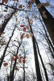 晚秋天在有五颜六色的叶子的公园 免版税库存图片