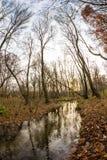 晚秋天在有五颜六色的叶子的公园 库存照片