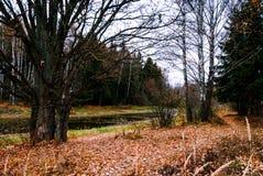 晚秋天在杉木森林里,叶子废弃物 免版税图库摄影