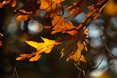 晚秋天在树离开 图库摄影