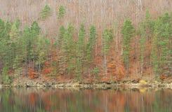 晚秋天森林湖 库存图片