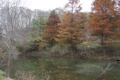 晚秋天池塘场面 库存照片
