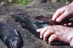 晚餐的两条鱼 免版税库存图片