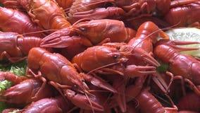 晚餐的煮沸的小龙虾 股票录像