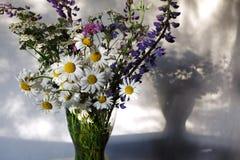 普列文花、羽扇豆和雏菊在花瓶 库存图片