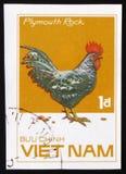 普利茅斯暗礁雄鸡,系列鸡品种,大约1985年 免版税图库摄影