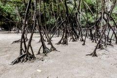 普吉岛泰国 免版税图库摄影