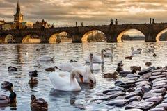普拉哈Karluv最,查尔斯桥梁日落 布拉格捷克,太阳集合,伏尔塔瓦河河 免版税库存照片