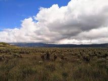 普拉塞全国自然公园在有paramo生态系的哥伦比亚 库存图片