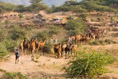 普斯赫卡尔公平的(普斯赫卡尔骆驼Mela)拉贾斯坦,印度 库存照片