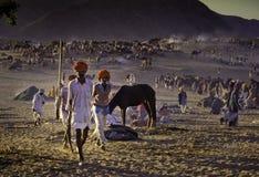 普斯赫卡尔,印度- 11月17 :在每年家畜fai的骆驼 免版税库存照片