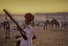 普斯赫卡尔,印度- 11月17 :在每年家畜fai的骆驼 免版税库存图片