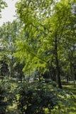 普罗夫迪夫,保加利亚- 2017年6月10日:沙皇西梅昂庭院全景在市普罗夫迪夫, 免版税库存图片