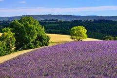 普罗旺斯农村风景 免版税库存图片