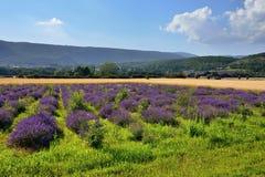 普罗旺斯农村风景 免版税库存照片