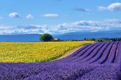 普罗旺斯农村风景 免版税图库摄影