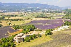普罗旺斯和淡紫色领域鸟瞰图  免版税库存图片