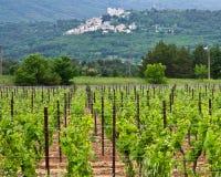普罗旺斯的葡萄园 库存图片