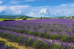 普罗旺斯风景,法国 免版税库存图片