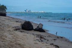 普腊亚做Paiva, Pernambuco -巴西 免版税库存照片