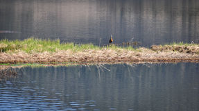 普达措国家公园在云南,中国 免版税库存图片