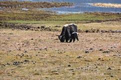 普达措国家公园在云南,中国 库存图片