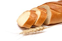 普通小麦 免版税库存图片