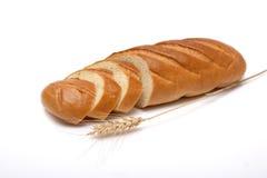 普通小麦 库存图片