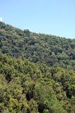 普通植被和蓝天 库存照片