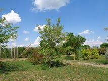 普通植被- Eutopia庭院- Arad,罗马尼亚 库存照片