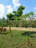 普通植被- Eutopia庭院- Arad,罗马尼亚 免版税库存照片