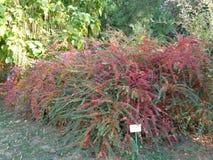 普通植被- Macea dendrological公园 阿拉德县,罗马尼亚 库存图片
