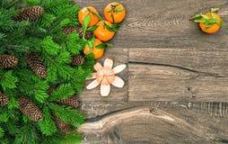 普通话果子和圣诞树分支 蜜桔 免版税库存照片