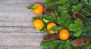 普通话果子和圣诞树分支 免版税图库摄影