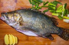 普通话鱼 免版税库存图片