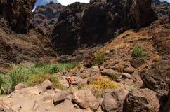 普遍的从Masca村庄的特内里费岛海岛供徒步旅行的小道岩石  免版税库存图片