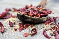 普遍的在木瓢的Resham patta红色辣椒 库存图片