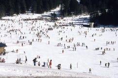 普遍的滑雪 库存照片